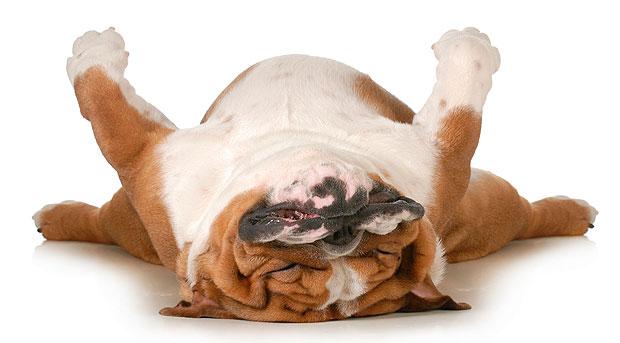 perro_durmiendo_narcolepsia2_final