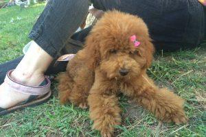 En busca del perro más guapo de Zaragoza