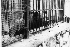 La osa del parque Bruil o el mini zoo de los horrores