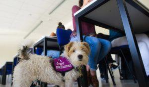 Reportaje a la empresa Canem dedicada al adestramiento de perros de asistencia